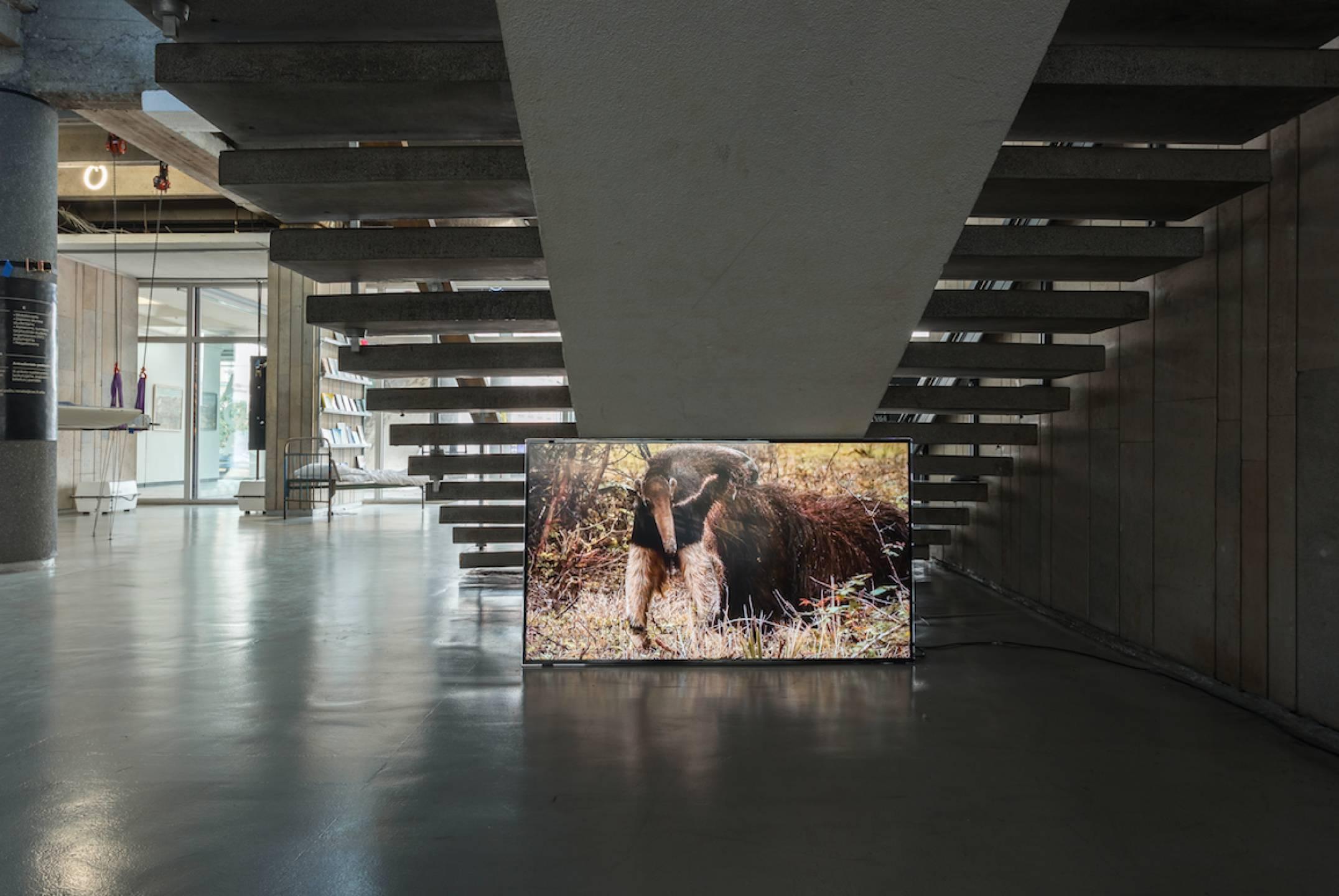 LuizRoque,<em>Ancestral</em>, Contemporary Art Center, Vilnius, 2017 - Mendes Wood DM