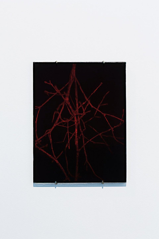 Daniel Steegmann Mangrané,<em>Holograma 4 (galho com bicho), </em>2013<em>, ultimate holography plates,26 x 20 cm</em> - Mendes Wood DM