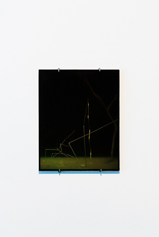 Daniel Steegmann Mangrané,<em>Holograma, </em>2013, ultimate Holography plates, 25 x 20 cm - Mendes Wood DM