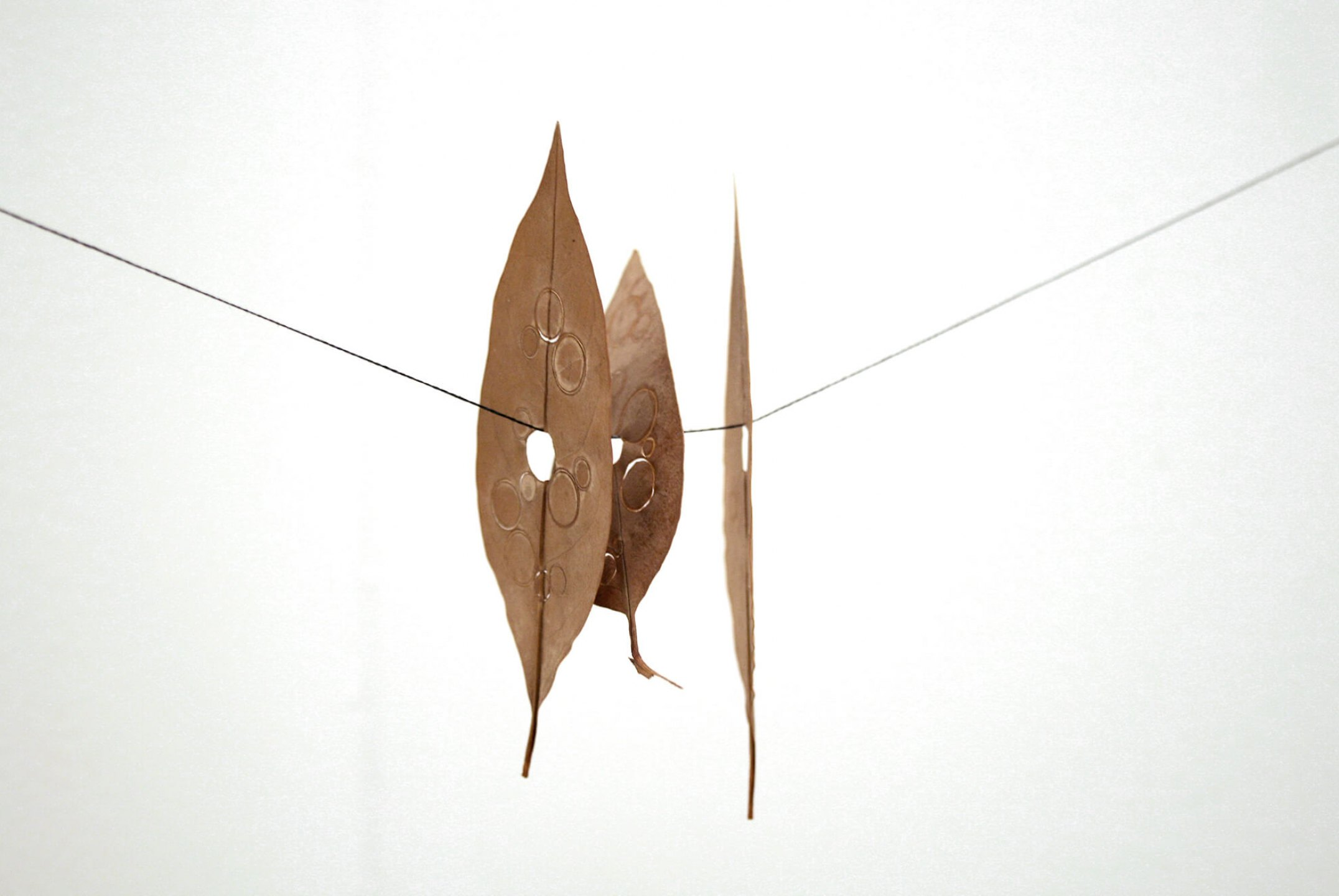 Daniel Steegmann Mangrané, <em>Fura folhas</em>, 2001,&nbsp;ficus elastica japonicum leaves printed and dehydrated, silk thread,&nbsp;10 x 3,5 cm / 8 x 3,5 cm / 10 x 3,5 cm - Mendes Wood DM