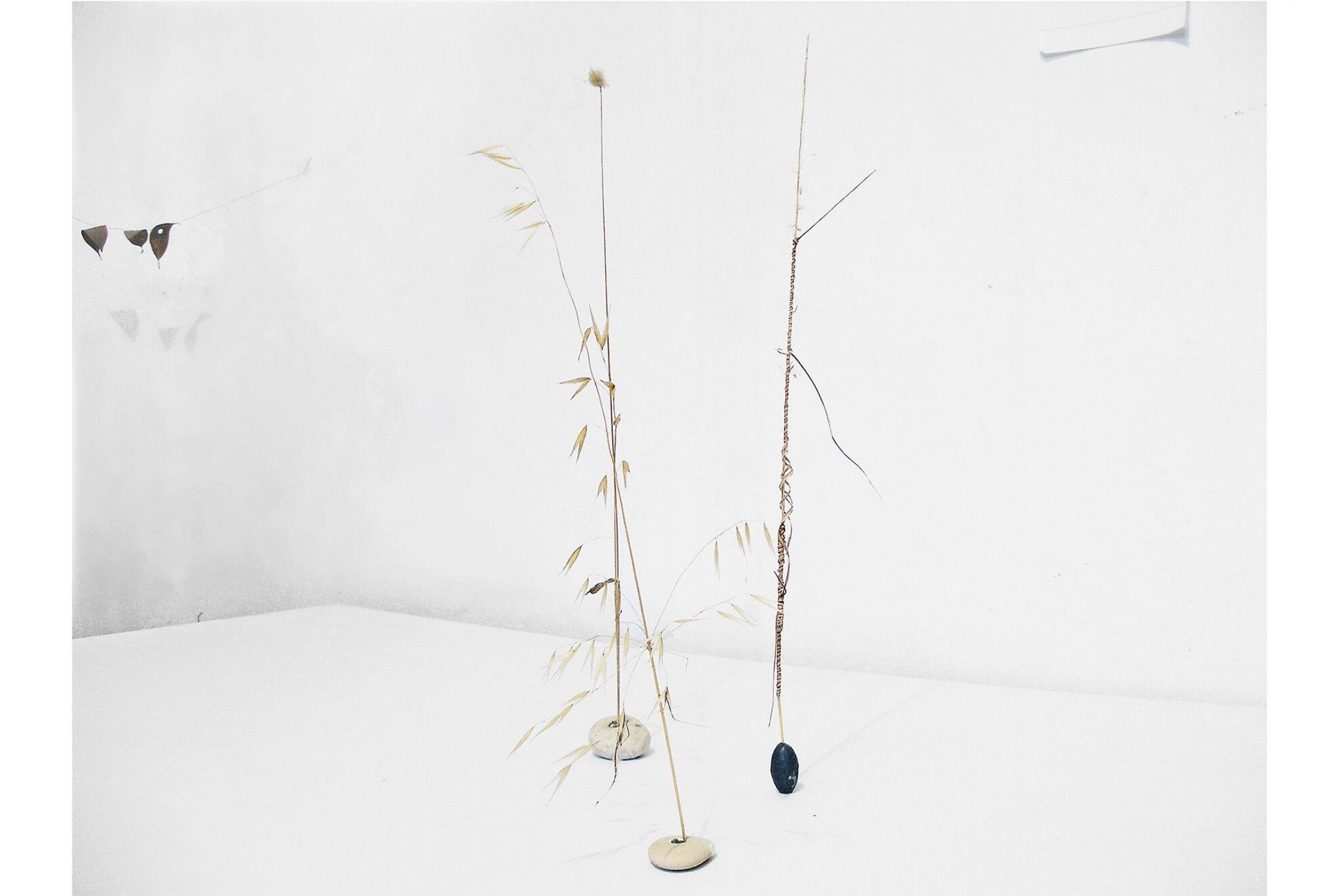 Daniel Steegmann Mangrané, <em>Gramíneas</em>, 1997, gramieous plants, mixed - Mendes Wood DM
