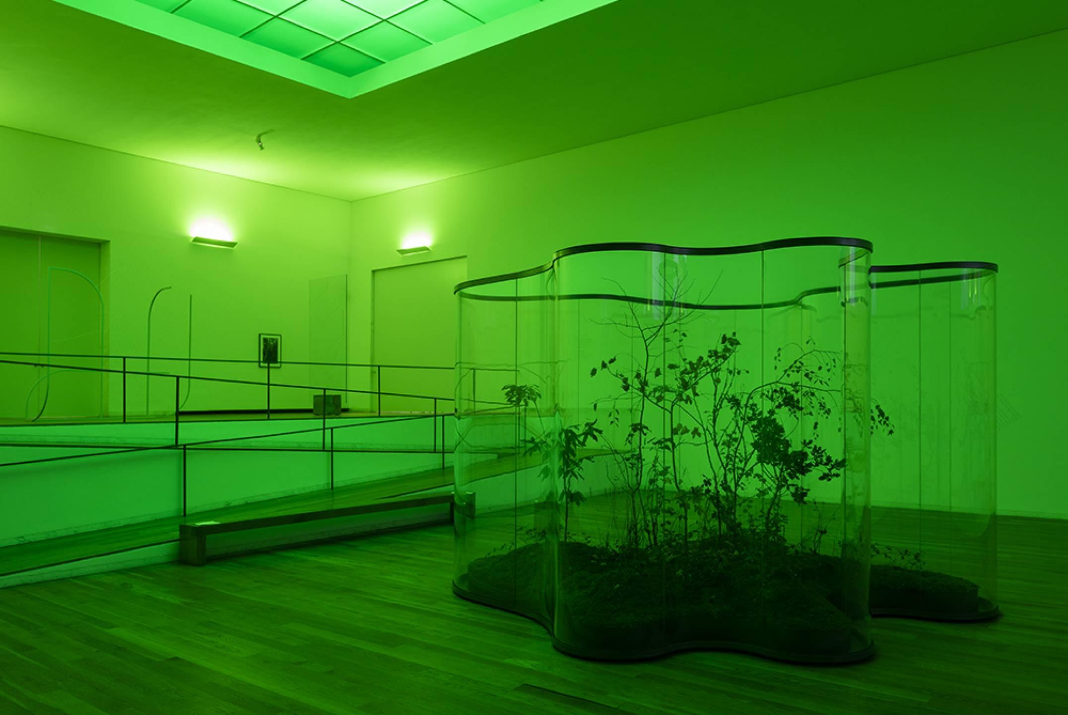 Daniel Steegmann Mangrané,&nbsp;<em>A Transparent Leaf, Instead of the Mouth</em>,&nbsp;Museu de Arte Contemporânea de Serralves,&nbsp;Porto, 2017 - Mendes Wood DM